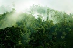 Foresta tropicale nebbiosa di mattina Immagini Stock Libere da Diritti