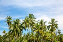 Foresta tropicale scenica della giungla, natura del Ceylon Immagini Stock Libere da Diritti