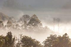 Foresta tropicale sull'alta montagna Fotografie Stock Libere da Diritti