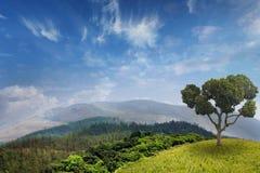 Foresta tropicale sulle montagne in estate fotografia stock