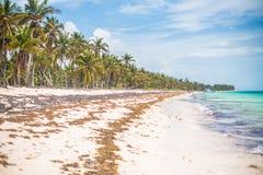 Foresta tropicale sulle palme, sulla sabbia, sulle alghe e sulle onde atlantiche della costa fotografia stock
