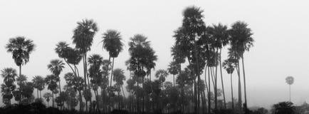 Foresta tropicale in una nebbia immagini stock