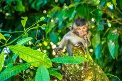 Foresta Ubud della scimmia in Bali Indonesia Immagini Stock