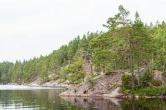 Foresta in un lago Fotografia Stock Libera da Diritti