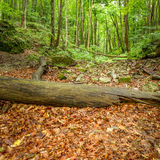 Foresta ungherese Fotografia Stock