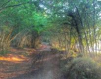 Foresta vaga Immagine Stock