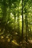 Foresta vaga magica Immagini Stock