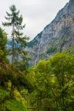 Foresta in valle di Lauterbrunnen nel cantone di Berna della Svizzera Fotografie Stock