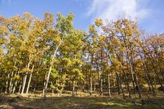 Foresta variopinta Fotografie Stock Libere da Diritti