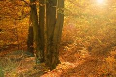 Foresta variopinta all'autunno immagine stock libera da diritti
