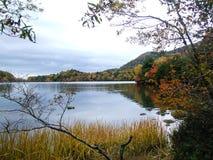 Foresta variopinta alla riva del lago in autunno immagini stock