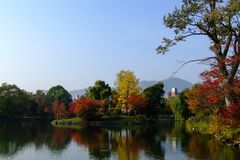 Foresta variopinta alla riva del lago in autunno fotografia stock