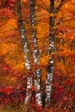 Foresta variopinta in autunno fotografia stock libera da diritti