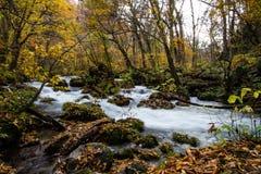 Foresta variopinta con la corrente corrente bianca in autunno fotografia stock libera da diritti