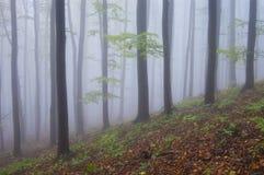 Foresta variopinta con nebbia in autunno immagine stock libera da diritti