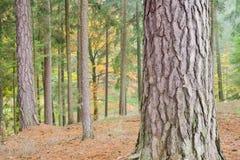 Foresta variopinta d'autunno Fotografia Stock