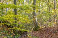 Foresta variopinta di autunno Immagine Stock Libera da Diritti