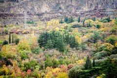 Foresta variopinta di autunno immagini stock libere da diritti