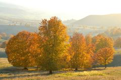 Foresta variopinta di autunno Immagini Stock