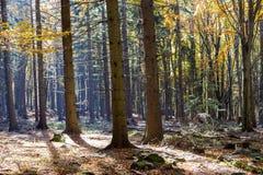 Foresta variopinta di autunno con sole meraviglioso Immagine Stock