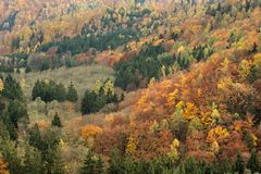 Foresta variopinta di autunno da sopra Fotografia Stock