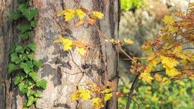 Foresta variopinta di autunno un chiaro giorno soleggiato stock footage