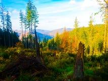 Foresta variopinta in montagne immagine stock libera da diritti