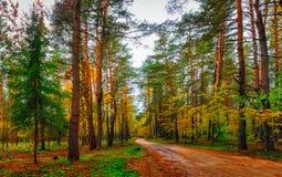 Foresta variopinta selvaggia della foresta di autunno nella caduta Paesaggio di paesaggio del terreno boscoso di autunno Fotografia Stock Libera da Diritti