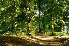 Foresta verde Fotografie Stock Libere da Diritti
