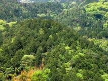 Foresta verde Fotografia Stock