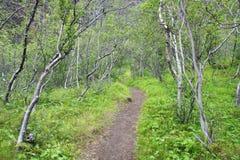 Foresta verde Immagine Stock