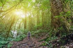 Foresta verde Immagine Stock Libera da Diritti