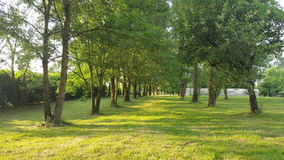 Foresta verde Immagini Stock Libere da Diritti