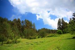 Foresta verde con cielo blu Immagine Stock
