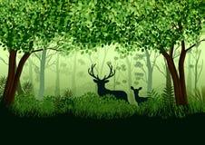 Foresta verde con gli alci selvaggi in foresta Immagini Stock