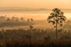 Foresta verde con il raggio delle luci sulla mattina Fotografie Stock