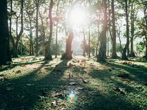Foresta verde con la luce del sole Immagine Stock Libera da Diritti