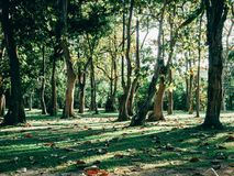 Foresta verde con la luce del sole Immagini Stock Libere da Diritti