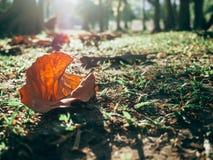 Foresta verde con la luce del sole Fotografie Stock