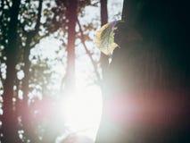 Foresta verde con la luce del sole Immagini Stock