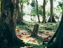 Foresta verde con la luce del sole Fotografia Stock