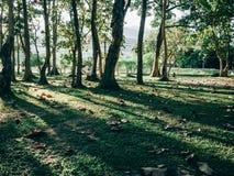 Foresta verde con la luce del sole Immagine Stock