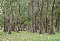 Foresta verde con la natura Fotografie Stock Libere da Diritti