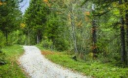 Foresta verde con la via Immagine Stock