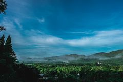 Foresta verde coperta di nebbia fotografia stock libera da diritti