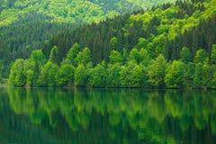 Foresta verde dal lago nella bellezza dell'acqua di riflessione in natura Fotografie Stock