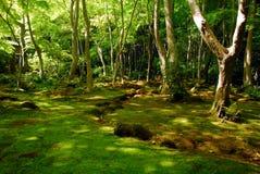 Foresta verde del muschio Fotografie Stock