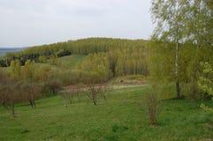 Foresta verde della betulla con erba nella priorità alta Immagine Stock