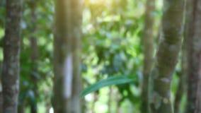 Foresta verde della giungla con luce solare in Tailandia stock footage