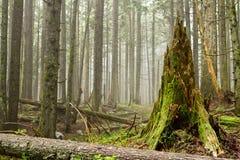 Foresta verde della molla nei raggi del sole fotografia stock
